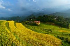 Terrazas de oro del arroz en Vietnam Imagen de archivo