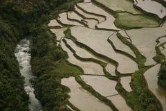 Terrazas del arroz Foto de archivo