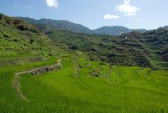 Terrazas del arroz Foto de archivo libre de regalías
