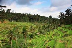 Terrazas del arroz Fotos de archivo