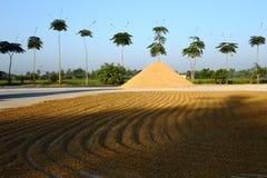 Terrazas del arroz Fotos de archivo libres de regalías