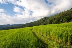Terrazas del arroz Fotografía de archivo libre de regalías