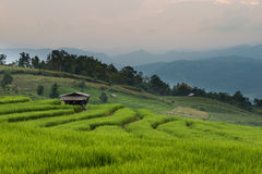 Terrazas del arroz Imagen de archivo libre de regalías
