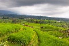 Terrazas del arroz bajo las nubes Imagen de archivo libre de regalías