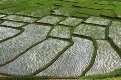Terrazas del arroz, Chiang Mai, Tailandia Fotografía de archivo libre de regalías