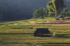 Terrazas del arroz, Chiang Mai, Tailandia Fotografía de archivo