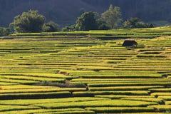 Terrazas del arroz, Chiang Mai, Tailandia Foto de archivo libre de regalías