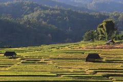 Terrazas del arroz, Chiang Mai, Tailandia Fotos de archivo