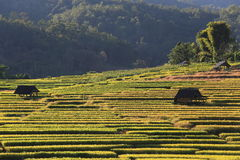 Terrazas del arroz, Chiang Mai, Tailandia Fotos de archivo libres de regalías