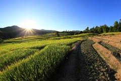 Terrazas del arroz, Chiang Mai, Tailandia Imagen de archivo libre de regalías