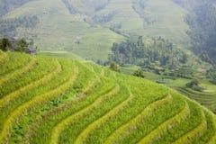 terrazas del arroz de arroz Imagen de archivo