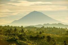 Terrazas del arroz de Bali Fotos de archivo