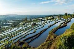 Terrazas del arroz de Bali Foto de archivo libre de regalías