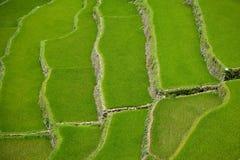 Terrazas del arroz de Banaue, Filipinas Foto de archivo libre de regalías
