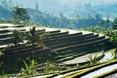 Terrazas del arroz de Jatiluwih Imagen de archivo libre de regalías