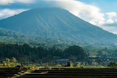 Terrazas del arroz de Jatiluwih Imagen de archivo