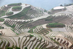 Terrazas del arroz de Longji Imagen de archivo libre de regalías