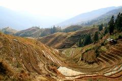 Terrazas del arroz de Longsheng, China Foto de archivo
