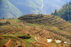 Terrazas del arroz de Longsheng, China Imagen de archivo libre de regalías