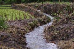 Terrazas del arroz en Chiang Mai, Tailandia Fotografía de archivo