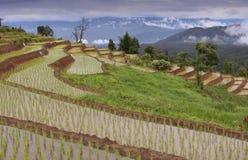 Terrazas del arroz en Chiang Mai, Tailandia Imágenes de archivo libres de regalías