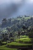 Terrazas del arroz en la lluvia, Bali una isla indonesia Foto de archivo
