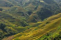 Terrazas del arroz en la montaña Foto de archivo