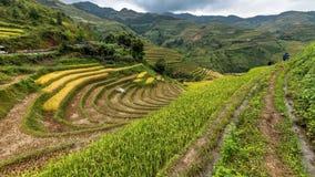 Terrazas del arroz en la montaña Fotos de archivo