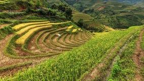 Terrazas del arroz en la montaña Foto de archivo libre de regalías