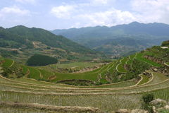 Terrazas del arroz en Sapa, Vietnam Imagen de archivo
