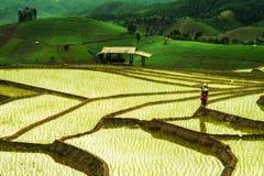 Terrazas del arroz en Tailandia Fotos de archivo
