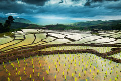 Terrazas del arroz en Tailandia Imagen de archivo