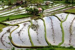 Terrazas del campo del arroz Imagenes de archivo