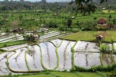 Terrazas del campo del arroz Foto de archivo libre de regalías