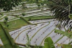 Terrazas del campo del arroz Imagen de archivo libre de regalías