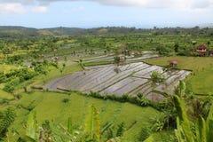 Terrazas del campo del arroz Fotografía de archivo libre de regalías