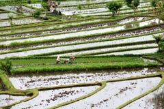 Terrazas del campo del arroz Imágenes de archivo libres de regalías