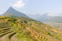 Terrazas del campo del arroz Foto de archivo