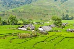 Terrazas del campo del arroz del PA del Sa en Vietnam Imagen de archivo