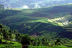 Terrazas del campo del arroz en Java imagen de archivo libre de regalías