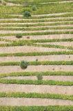 Terrazas del viñedo de Portugal del valle del Duero Imagen de archivo libre de regalías