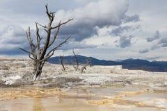Terrazas en Mammoth Hot Springs en Yellowstone Fotografía de archivo libre de regalías