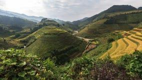 Terrazas hermosas del arroz, Asia sudoriental Imagen de archivo libre de regalías
