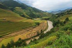 Terrazas hermosas del arroz, Asia sudoriental Foto de archivo