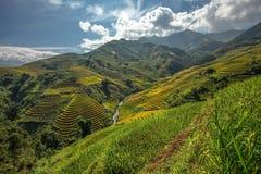 Terrazas hermosas del arroz, Asia sudoriental, Vietnam Imagen de archivo
