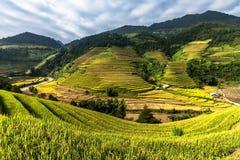 Terrazas hermosas del arroz, Asia sudoriental, Vietnam Fotografía de archivo