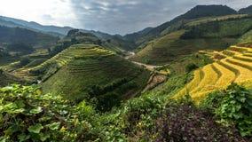 Terrazas hermosas del arroz, Asia sudoriental, Vietnam Foto de archivo