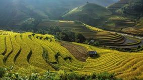 Terrazas hermosas del arroz, Asia sudoriental, Vietnam Imagenes de archivo
