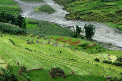 Terrazas Sapa del arroz Imágenes de archivo libres de regalías