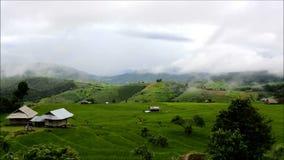 Terrazas y niebla del arroz en Chiang Mai almacen de video